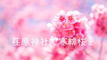 荏原神社で東京一の早咲きの寒緋桜(緋寒桜)を撮ってきた話