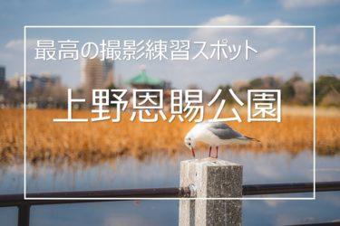 上野恩賜公園に撮影に行ってきた! 最高の写真練習スポットだった!