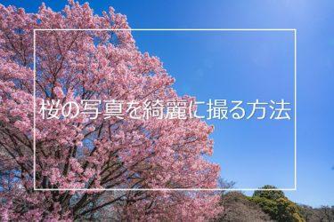 桜の写真を綺麗に撮りたい人へ 上手に撮るための5つのポイント