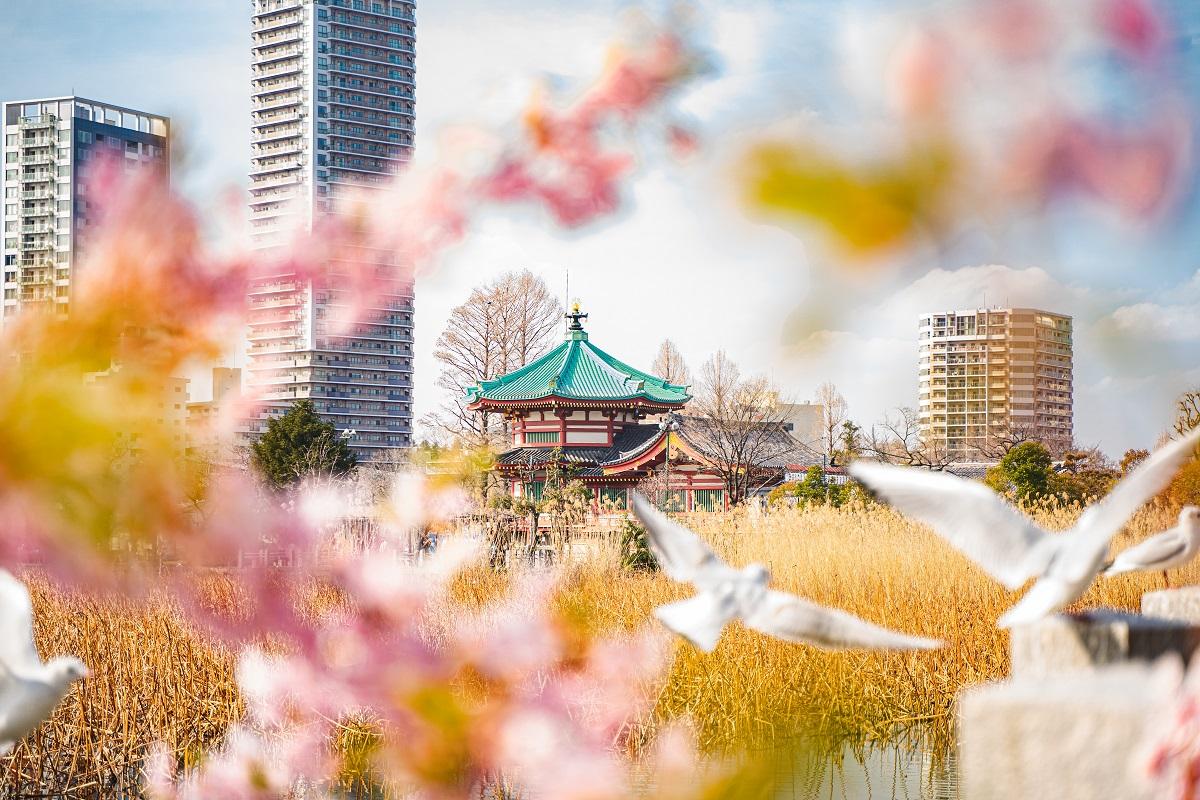 上野,桜,不忍池,弁天堂