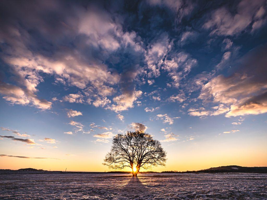 ハルニレの木,北海道,初日の出