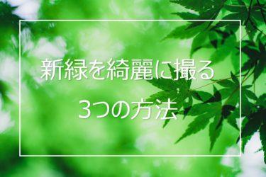 新緑をより鮮やかに綺麗に撮る3つの方法