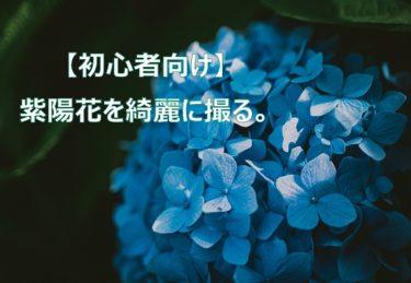 カメラ初心者が紫陽花を綺麗に撮る方法