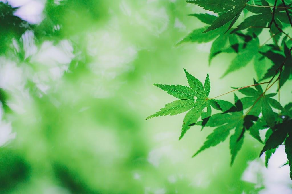 新緑,紅葉,緑,ボケ