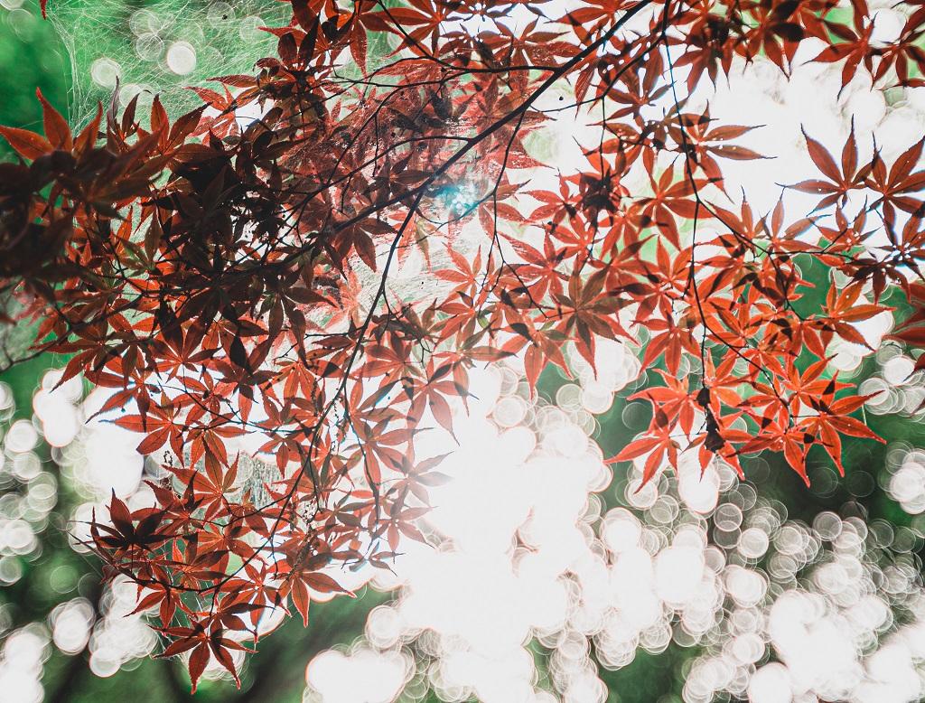 紅葉,玉ボケ,白飛び