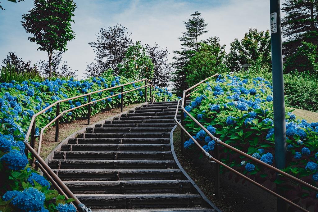 お台場,紫陽花,東京
