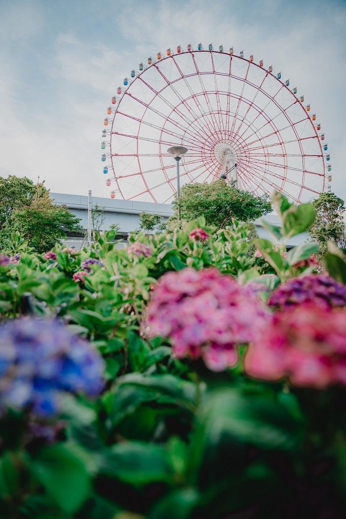 水の広場公園,紫陽花,観覧車