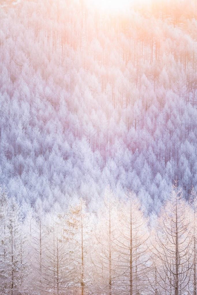 霧氷,太陽,氷,雪