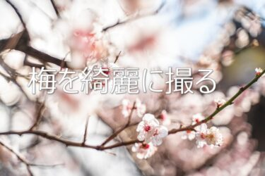 梅の写真を綺麗に撮りたい人へ 上手に撮るための4つのポイント