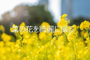菜の花の写真を綺麗に撮りたい人へ!写真を綺麗に撮るための4つのポイント