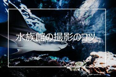 水族館で綺麗な写真を撮るためのコツと注意事項