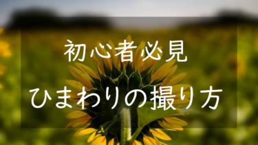 【ひまわりの撮り方】カメラ初心者でも綺麗な夏の写真を綺麗に撮る方法